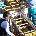 モズクのフコイダン含有量は昆布の15~16倍