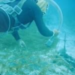 フルボフコイダンのもずくは沖縄産を100%使用
