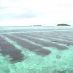 がん治療にも有効!? 海の食物繊維「フコイダン」と天然成分「フルボ酸」の効果とは|整腸作用や免疫活性、抗ウイルス効果